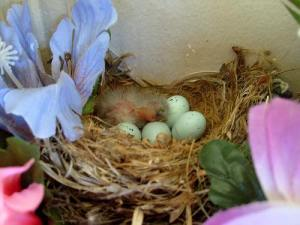 bird eggs in nest by james case on Flickr Creative Commons